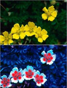 visible-spectrum-bee-vision-ultra-violet-1