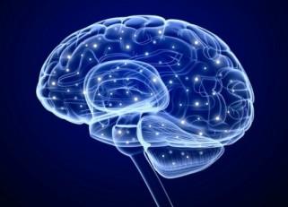 Brain-537x387