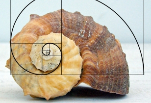 fibonacci-whelk.jpg