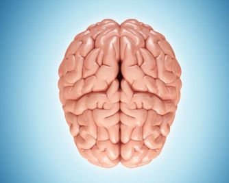 brain-896674